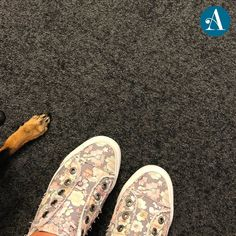 Just a beautiful pair of shoes and their loyal little buddy... Gucci, Slip On, Pairs, Sneakers, Shoes, Beautiful, Fashion, Tennis, Moda