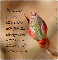 """Those that trust in their riches will fall: but the righteous will blossom like a branch. Italian Proverbs, Proverbs 11, Faith Quotes, Bible Quotes, Jesus Quotes, Christian World, Christian Faith, Growth Mindset Quotes, Appreciation Quotes"