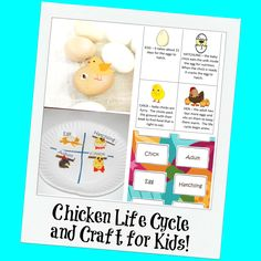 Chicken Life Cycle and a Paper Plate Craft for Kids! #chickenlifecycle #wikkistix #ece #weteach #teachers