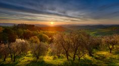 Garden of Eden - Olive grove at the footsteps of Montepulciano, Tuscany, Italy Garden Of Eden, Inspiring Photography, Tuscany Italy, Vineyard, Celestial, Sunset, Outdoor, Outdoors, Vine Yard