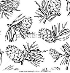 line drawing pine cone branches - Google Search