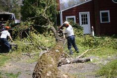 Arbor Services in action, removing a tree. Photo by R. Brian Watkins (http://endz.biz)