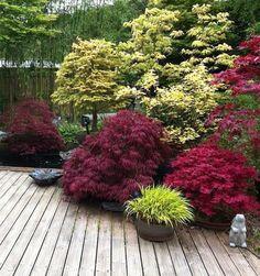Precious Tips for Outdoor Gardens - Modern Japanese Garden Landscape, Small Japanese Garden, Japanese Garden Design, Small Garden Design, Japanese Maple, Back Gardens, Small Gardens, Outdoor Plants, Outdoor Gardens