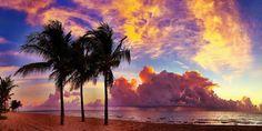 Agrumi della Florida di Andy Royston