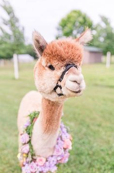 A Quirky Wedding with Alpacas and Whimsy Galore