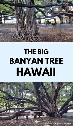 maui hawaii things to do. lahaina tree. US beach vacation ideas from west coast. best outdoor destinations Us Beach Vacations, Hawaii Vacation, Maui Hawaii, Kauai, Beach Trip, Vacation Ideas, Maui Travel, Travel Destinations Beach, Hawaii Things To Do