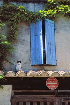 French Cat on Roof