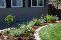 Sustainable, Low Maintenance Garden Design in Campbell, California | Taproot Garden Design & Fine Gardening
