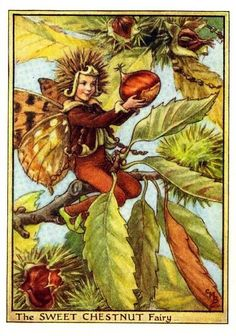 Sweet Chestnut Flower Fairy Vintage Print by Cicely Mary Barker printed c.1950 – The Sweet Chestnut Flower Fairy is one of Cicely Barkers Tree Flower Fairies.