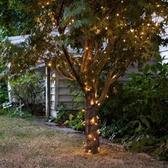 100 Warm White LED Outdoor Battery Fairy Lights On Green Cable | Lights4fun.co.uk