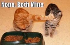 Gotrek and Trouble! My two cats are like that. They're brothers, but Gotrek, the orange tabby, is 2 years older.