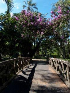 Parque Municipal BH