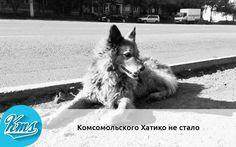 "http://kms.ru/news/hati.html  Собака Найда умерла сегодня утром в приюте ""ЗооСпас"" / kms.ru/news/hati.html"