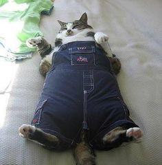 A fat cat in overalls.