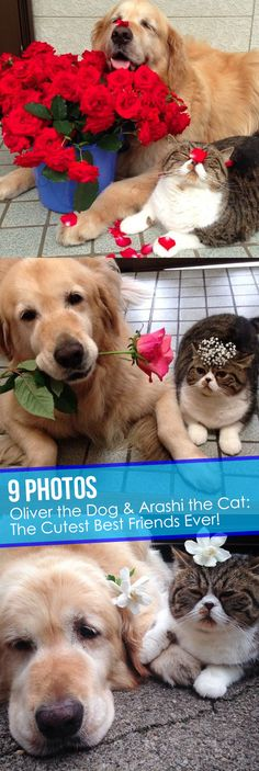 Oliver the Dog and Arashi the Cat are best friends and it's so adorable! #6 is my favorite! #cats #dogs