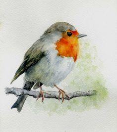 Petirrojo   Robin - watercolor art by Carmen Jiménez