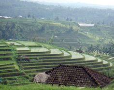 SUBAK – the unique Balinese Rice Farming Culture - designated UNESCO World Heritage | Visit Indonesia - Official Website for Indonesia Tourism and Travel Information