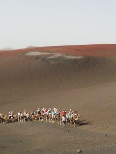 camel ride on Mount Tiede