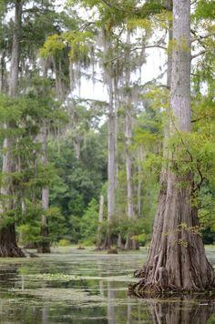 Mississippi  #AmericaBound @Earthbound Farm