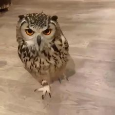Owl The Effective Pictures We Offer You About Cutest Baby Animals funny A quality picture can tell y Funny Animal Videos, Cute Funny Animals, Cute Baby Animals, Animals And Pets, Funny Owls, Baby Owls, Owl Baby Stuff, Baby Giraffes, Wild Animals