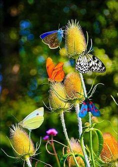 Assorted butterflies on teasel