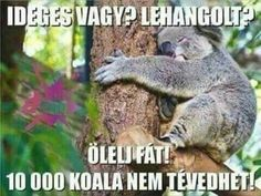 Free Hugs, Animals And Pets, Funny Jokes, Haha, Poems, Funny Pictures, Positivity, Feelings, Comics
