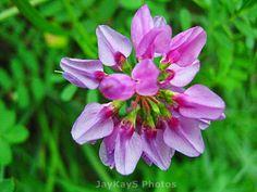 Very pretty flower~*