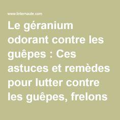Le géranium odorant contre les guêpes : Ces astuces et remèdes pour lutter contre les guêpes, frelons et frelons asiatiques - Linternaute