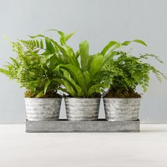 Ridged Pot Fern Trio ($68) ❤ liked on Polyvore featuring home, outdoors, outdoor decor, green, garden container, outdoor patio decor, outdoor pots and green pots