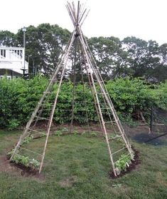 bean teepee-Pick up a dozen or so bamboo or willow poles at your local garden center and drive them into the ground at even intervals around a circle in the dirt, leaving a gap for the entrance. Plant a bean seed at the base of each pole and train the beans onto the tepee as they grow by marlene