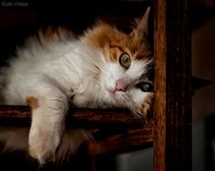 #Cat  Like,Repin,Share, Thanks!