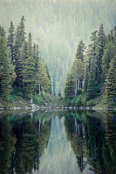 """renamonkalou: """" Green Trees   Jayson McIvor """""""