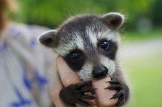 Zdjęcie nr 1 w galerii - Te małe zwierzaki są tak słodkie, że wystarczy na nie spojrzeć, a od razu poprawia się humor