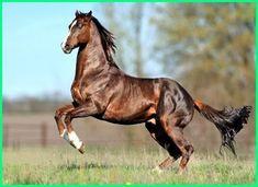 Equine Pictures 8 - 1124 X 749 Original Image, Predator, Clip Art, Horses, Pictures, Animals, Logo, America, Photos