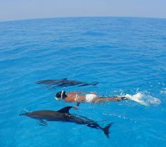 Swim with Wild dolphins!!  I would NEVER swim with captive dolphins, so unfair!  They are meant to be FREE!!!