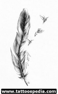 Realistic Feather pencil drawing