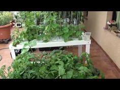 Cultivo Hidroponico casero 4.4 - YouTube