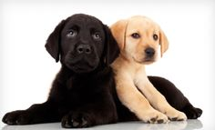 Groupon - One, Two, or Three Days of Doggy Daycare at Club K-9 (Up to 59% Off). Groupon deal price: $19.00