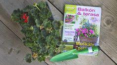 Kúpili ste si muškáty? Tak ich spolu vysaďme. Parsley, Celery, Vegetables, Vegetable Recipes, Veggies