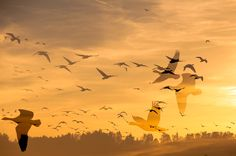 migration by Graziella Serra Art & Photo on 500px