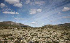 Viaggio Di Gusto: Uno sfondo alla settimana - L'altopiano Hardangerv...