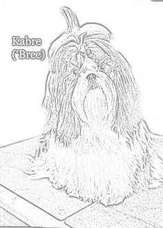 shih tzu coloring pages - shih tzu coloring pages free coloring pages pinterest
