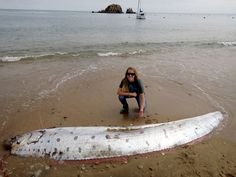 "Rare ""Sea Serpent"" Oarfish Wash Ashore On New Zealand And California Beaches Kids News Article"
