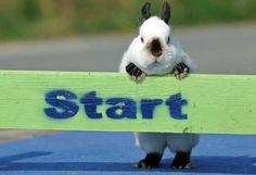 "Here is Bun-Bun getting ready for the official start of the 2014 GREAT RACE! Bun-Bun hops around to fun and exciting action everywhere, if it's fun you might as well say ""There's BUN-BUN!!!"" ;)"