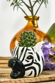 Shop Mini Zebra Head Plant Pot at Urban Outfitters today. We carry all the latest styles, colours and brands for you to choose from right here. Urban Outfitters, Head Planters, Garden Pots, Potted Garden, Decorative Cushions, Home Decor Accessories, Decoration, Potted Plants, House Plants