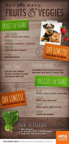 Here's a guide to the #fruits and #veggies you can share with your #dog!