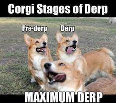 Corgi-Stages-of-Derp-resizecrop--.jpg (491×441)