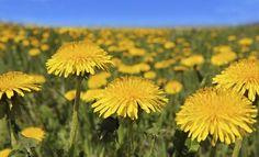 30 krátkych básničiek o jari | Básničky, veršovačky, rýmovačky | Detská reč | Babetko.Rodinka.sk Jar, Plants, Plant, Jars, Glass, Planets