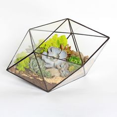"""Мини-садик  """"Кристалл"""" - флорариум, террариум, цветы, растения, суккуленты, букет, подарок, подарок девушке"""