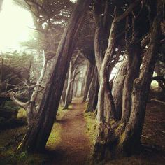 Real forest of crooked trees